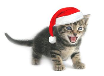 santa claus cat | Volvoab